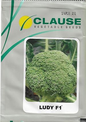 Benih Brokoli - Broccoly Ludy F1 - CLAUSE