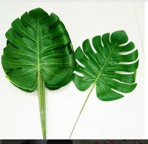 Tropical Leaf (daun monstera) per daun /lembar
