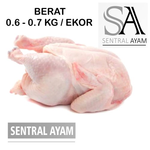 Ayam Karkas Broiler Ayam Potong Utuh Negeri 0.6 kg 6 ons Fresh Frozen