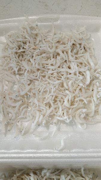 Ikan Teri Toge - Teri Medan 1kg
